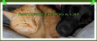 NEW pro pejsky a kočičky